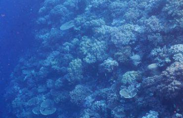 Gunung karang
