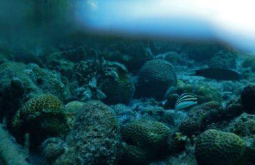 Ikan dan karang di tempat dangkal