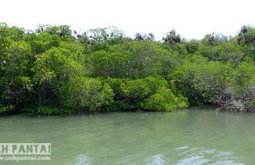 Sarang Kelelawar Pulau Ontoloe