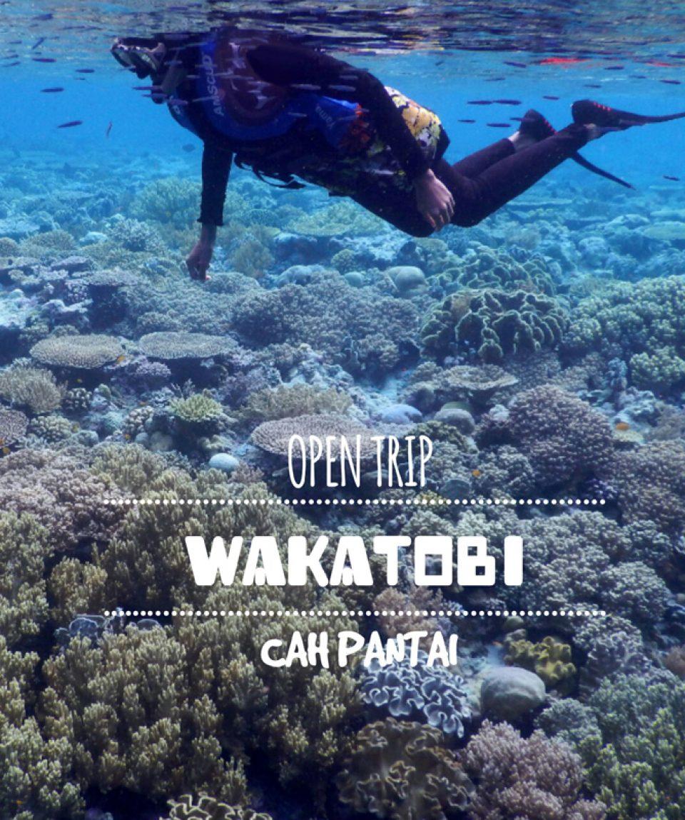 Resize_Logopit_Wakatobi